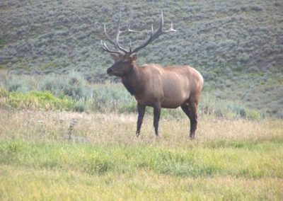 big-game-colorado-7
