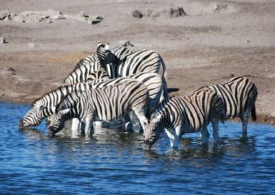 photo-safaris-16