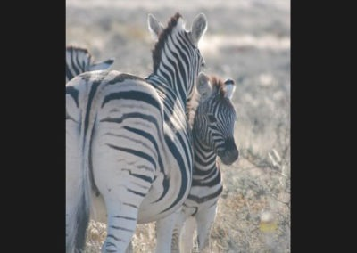 photo-safaris-23