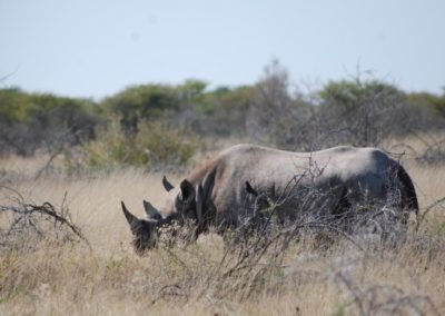 photo-safaris-27