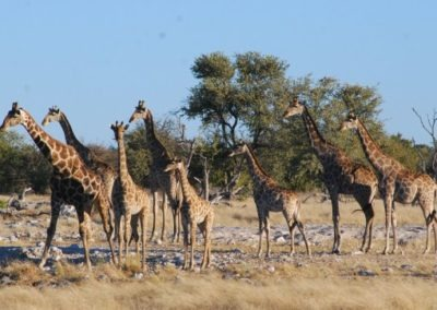 photo-safaris-30