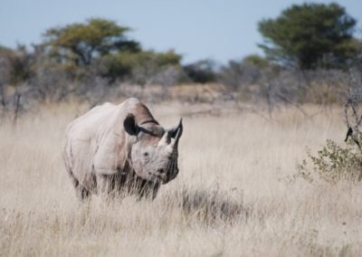 photo-safaris-42